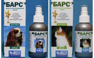 Spray Bar da pulci per cani e gatti