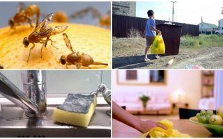Come sbarazzarsi di piccole mosche nell'appartamento