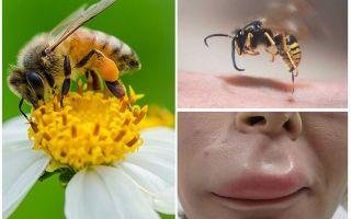 Cosa fare se un'ape ha morso il labbro