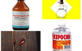 I rimedi popolari più efficaci per gli scarafaggi