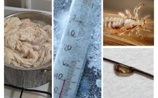 A quale temperatura muoiono i pidocchi e le pidocchi?