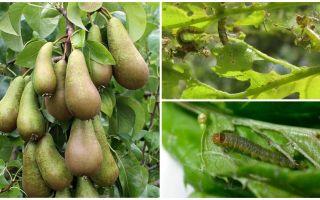 Come trattare i volantini su una pera