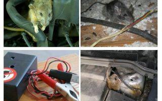 Come sbarazzarsi di ratti sotto il cofano di una macchina