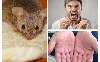 Cosa può essere infettato dai topi