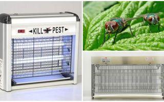 Come fare una trappola per le mosche a casa