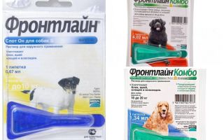 Gocce frontline da pulci per cani