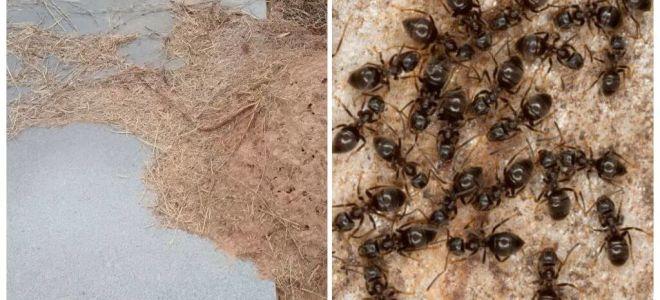 Come sbarazzarsi di formiche sulla tomba