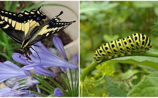 Trasformando un bruco in una farfalla