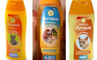 Shampoo delle pulci di prato
