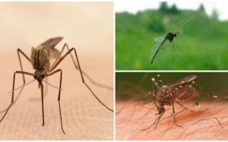 Fatti interessanti sulle zanzare