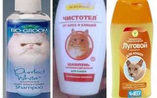 Ogni quanto posso lavare con lo shampoo delle pulci
