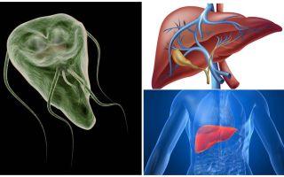 Giardia nel fegato - sintomi e trattamento
