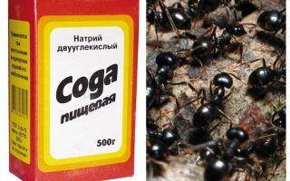 Soda contro le formiche in giardino