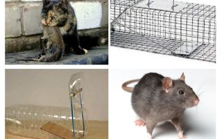 Come ottenere topi da una casa privata