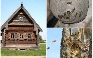 Come far uscire le api dalla casa di legno e da altri luoghi