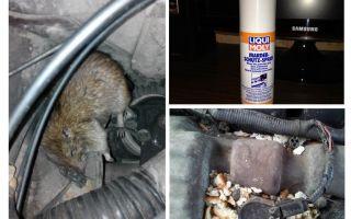 Ratti spray per l'auto