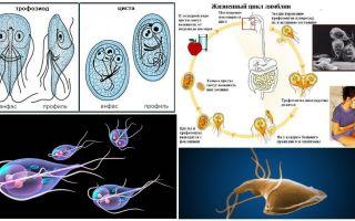 Ciclo di vita di Giardia e trattamento delle cisti