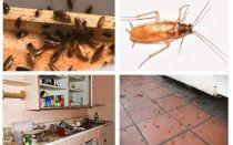 Sbarazzarsi degli scarafaggi nell'appartamento una volta per tutte