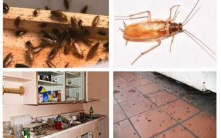 Cosa fare se hai visto uno scarafaggio in cucina