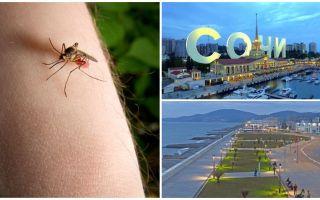 Ci sono zanzare a Sochi e Adler