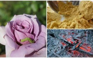 Come spruzzare rose da bruchi e afidi