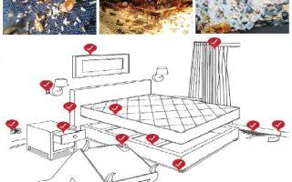 Come trattare in modo indipendente con le cimici nell'appartamento