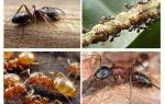 Le formiche del giardino danneggiano e beneficiano