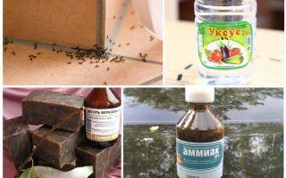 Combattere le formiche in una casa o in un appartamento