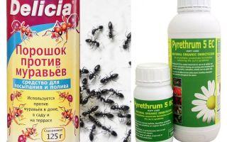Veleno formico in un appartamento o in una casa