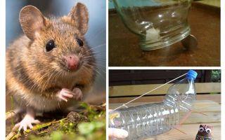 Come prendere un topo in una casa senza una trappola per topi
