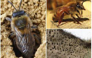 Come rimuovere le api della terra dal sito