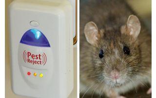 Roditori e insetti di repellenti ultrasonici di Pest Redzhekt