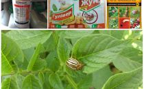 I veleni e i veleni più efficaci dallo scarabeo della patata del Colorado