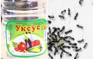 Aceto contro le formiche in giardino
