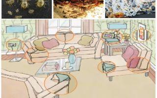 Cosa e come avvelenare gli insetti a casa