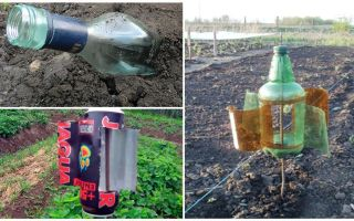 Come rimuovere la talpa dalla dacia o dal giardino
