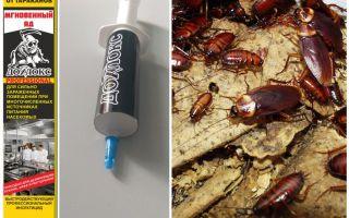 Significa Dohloks dagli scarafaggi