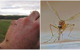 In quali paesi e città non ci sono zanzare