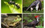 Chi mangia le formiche
