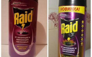 Bed Raid Remedy