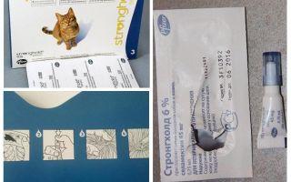 Le migliori gocce sul garrese per i gatti da pulci e vermi