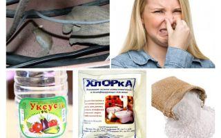 Come sbarazzarsi dell'odore dei topi