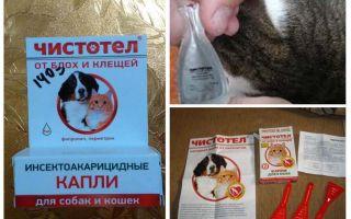 Gocce di celidonia dalle pulci per cani e gatti