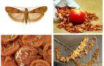 Cosa fare se la talpa si avvia nelle mele essiccate