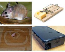 Come rimuovere i topi da una casa privata