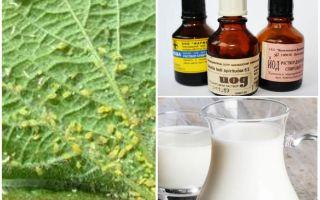 Latte con iodio dagli afidi