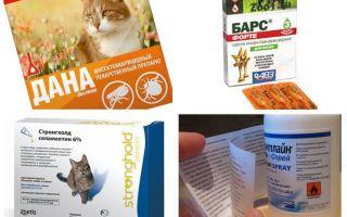 I migliori rimedi per le pulci per i gatti