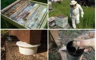 Come sbarazzarsi di formiche nei rimedi popolari apiario