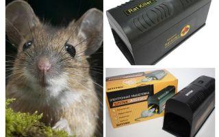 Electro trappola per topi