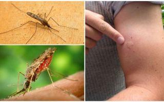 Cosa fare se sei morso da una zanzara anofele